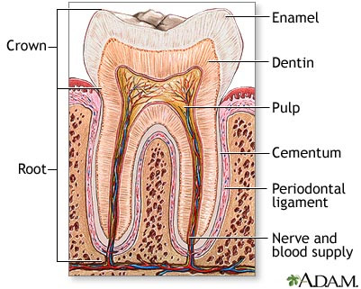 Root Canal Treatment | Great Shelford Dental Surgery